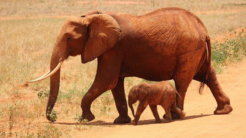 Best safari zone in Jim Corbett for wildlife safari